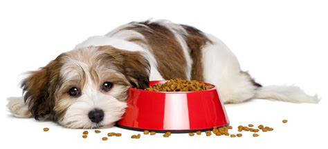 puppy food allergy does your food allergies