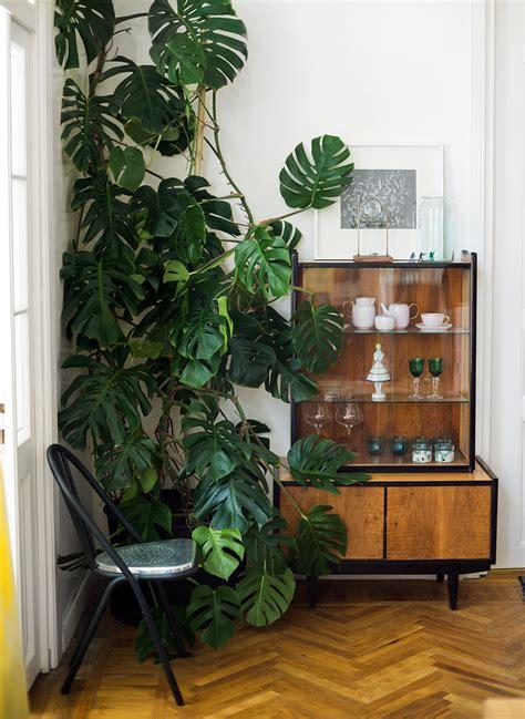 Scandinavian Livingroom plantas para decorar sua casa costela de ad 227 o simplichique