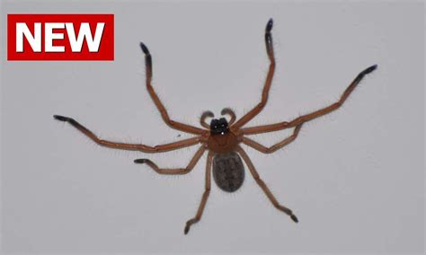 how to keep spiders out of basement how to get rid of spiders how to kill spiders how to