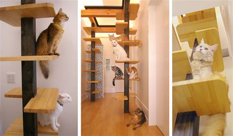 another amazing cat friendly house design from japan