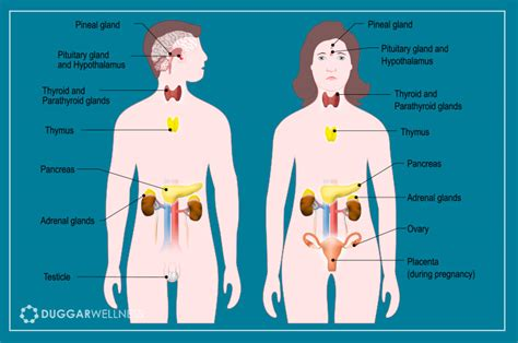 Detox Your Endocrine System by Controlling The Chaos Of Hormonal Imbalance Duggar Wellness