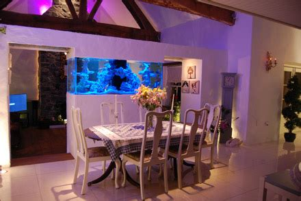 aquarium design ireland exotic aquatics belfast aquarium design northern
