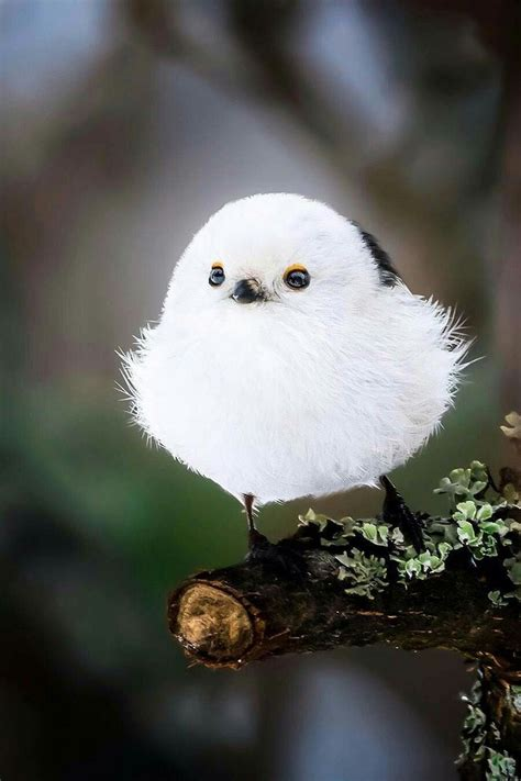 pin  ama lilhil  animal wild birds photography cute