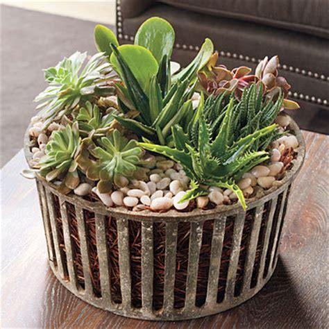 succulent house best indoor houseplants succulents best indoor