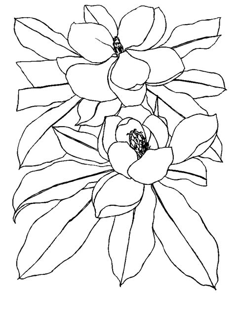 coloring pages of australian flowers flowers coloring pages coloringpages1001