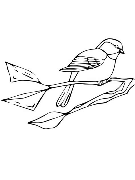 black capped chickadee coloring page sketch coloring page