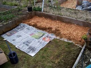 replacing mulch replacing grass with wood chips