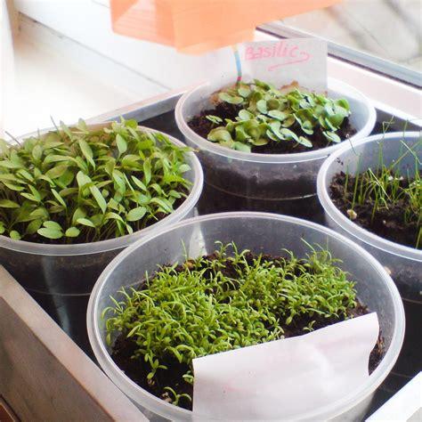 crear casa c 243 mo crear un huerto en casa con hierbas arom 225 ticas