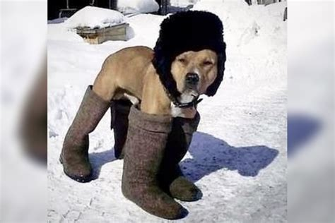 The Cold 10 pets who just can t handle the cold petful