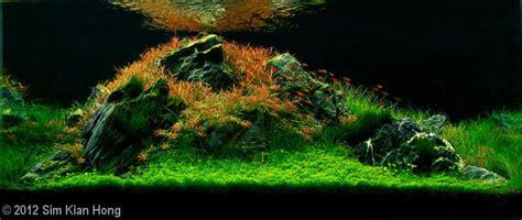 aquascape zonder co2 5 tips voor een natuurlijker hypnotiserend aquarium