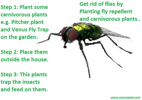 how to get rid of flies permanently in fast ways