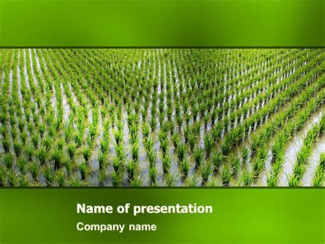 powerpoint themes rice rice paddies presentation template for powerpoint and