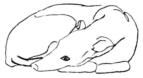 greyhound curled up sketch animals dogs g greyhound