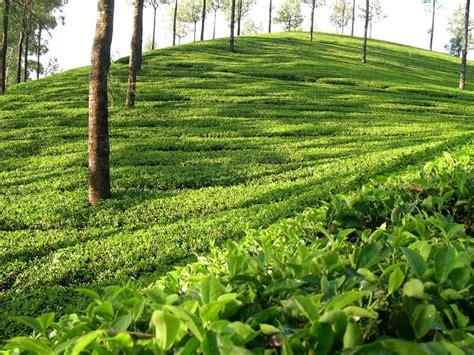 beautiful bangladesh landscapedesigntz