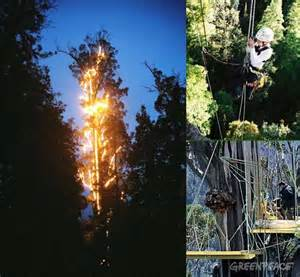 world s tallest living christmas tree is home to