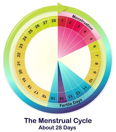 test di gravidanza dopo quanti giorni quanti giorni dopo il ciclo avviene l ovulazione