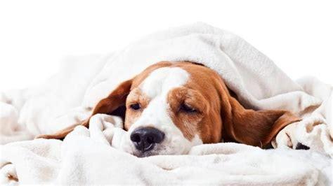 diarrea e alimentazione dieta per cani con diarrea