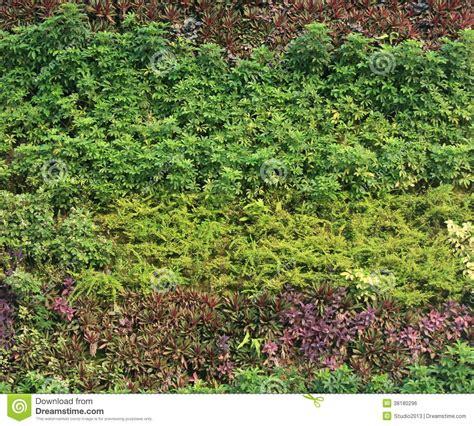 green garden wall green wall vertical garden royalty free stock image