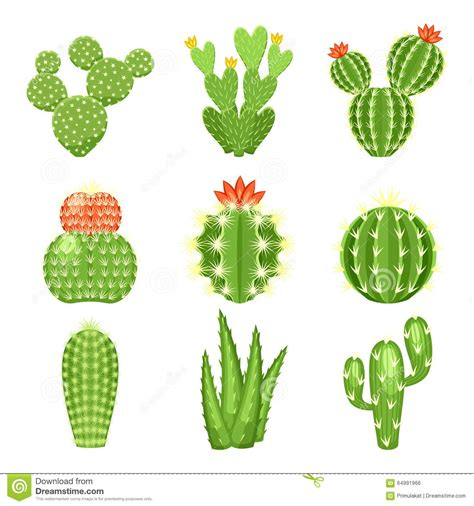 vector icon set of colored cactus and succulent stock