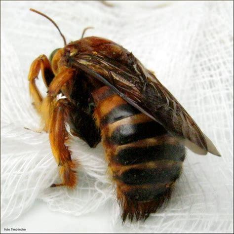 A Vida das Abelhas em Sociedade: Rainha, Operários e