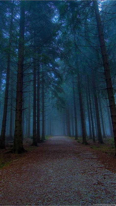 wallpapers twilight forest desktop background