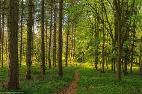 imagenes de bosques otoñales descargar gratis bosque sendero 225 rboles paisaje fondos