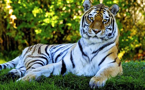 imagenes wallpaper de animales animales y paisajes