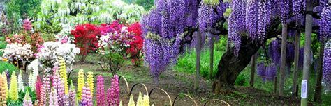 kawachi fuji garden kawachi fuji gardens japan feel the planet