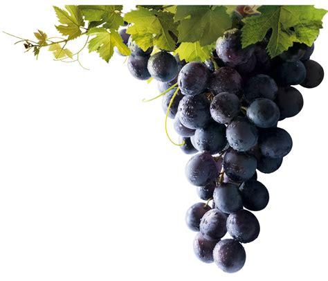 imagenes uvas moradas uvas laura c j blog