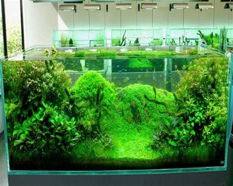 17 best images about aquascaping on shallow