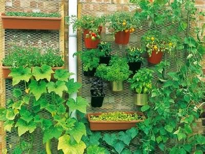 membuat vertical garden solusi asri untuk rumah minimalis