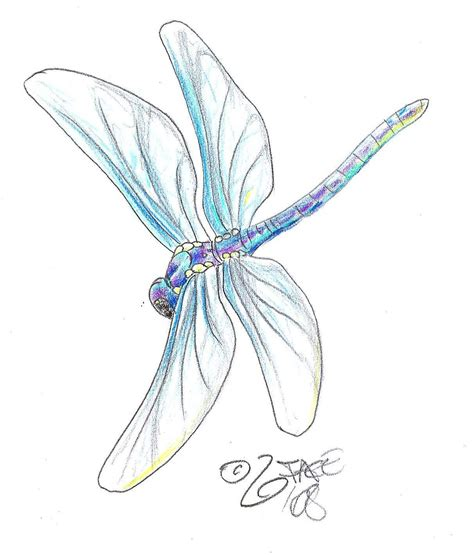 dragonfly design by 2face on deviantart