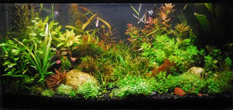 membuat background aquascape 49 tanaman aquascape yang di area belakang aquarium