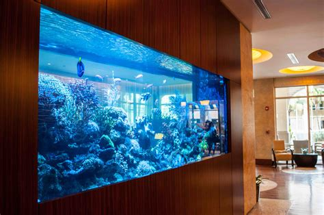 Design Awesome Amazing Aquarium Fish Tanks Decoration Toobe8 Modern Large Of The That Has Brown