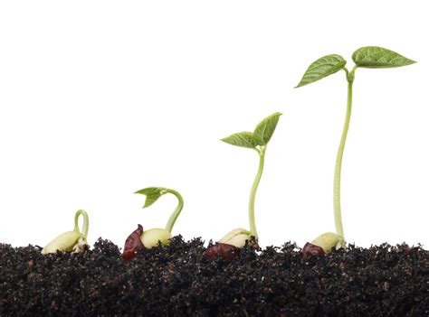 Di Grow seed growth