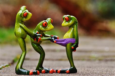 imagenes graciosas 4k free images cute green hibian toy laugh tree