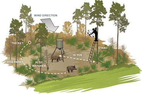 Deer Feeder Placement baiting big big realtree