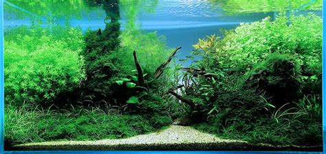 award winning aquascapes gallery aqua design