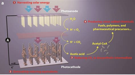 major advance  artificial photosynthesis poses winwin   environment berkeley lab