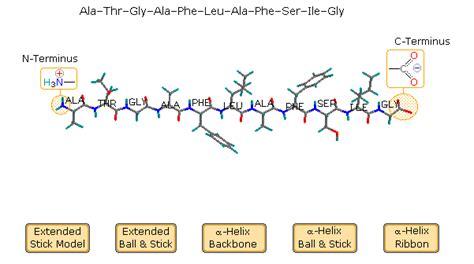 protein n terminus proteins
