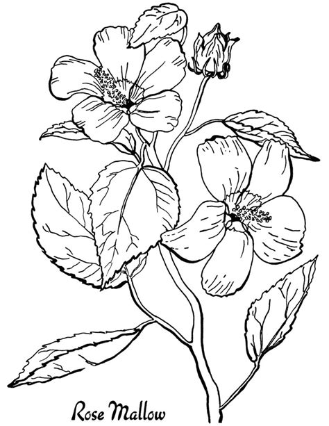 florals a coloring book for adults coloring collection books coloring pages free roses printable coloring page