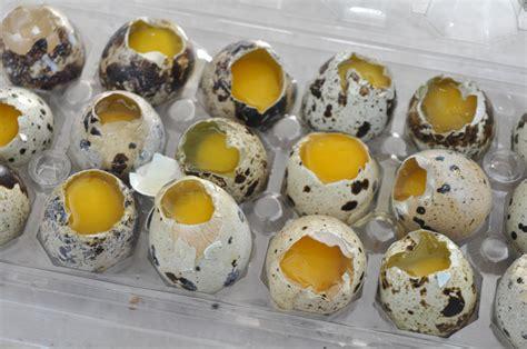come cucinare uova di quaglia uova di quaglia ricette
