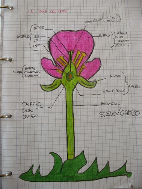 le parti fiore scuola primaria il gufo e la tartaruga le parti fiore l