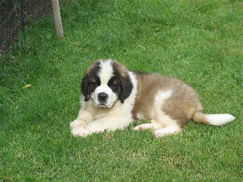 best breed of for me best family breed for me breeders guide