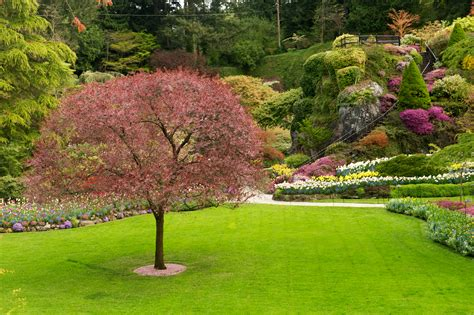 lawn garden from butchart gardens rick holliday