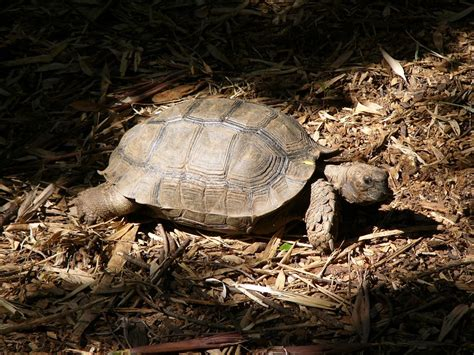 Tortoise L by The Zoo Brown Tortoise