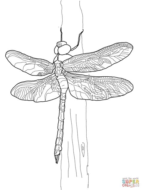dragonfly drawing dragonfly coloring pages adult