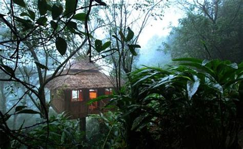 famous tree houses famous tree houses in kerala top 15 tree houses in kerala