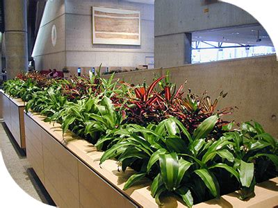 planter boxes  hire sydney buildings hotels offices