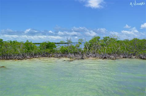 key largo key largo fl pictures posters news and on your